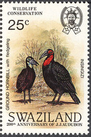 Swaziland 1985 WWF Southern Ground Hornbill (Audubon birth bicentenary) a