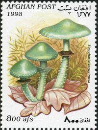 Afghanistan 1998 Mushrooms c