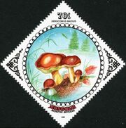 Mongolia 1985 Mushrooms e