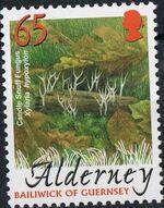 Alderney 2004 Mushrooms f