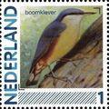 Netherlands 2011 Birds in Netherlands a6.jpg