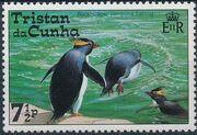 Tristan da Cunha 1974 Rockhopper penguins c