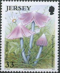 Jersey 2005 Nature - Fungi II a