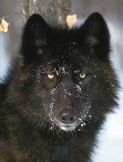Sweet Fur Amy