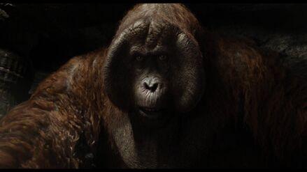 High-Def Digest www.highdefdigest .com Blu-ray Review The Jungle Book 2016 6
