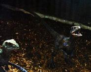 Raptor echo