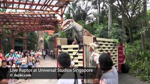 Live Raptor at Jurassic Park, Universal Studios Singapore dejiki