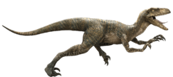 Velociraptor-detail-header.png
