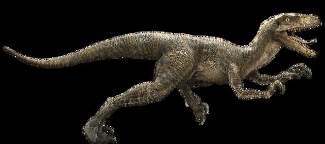 File:Velociraptor-detail-header.png