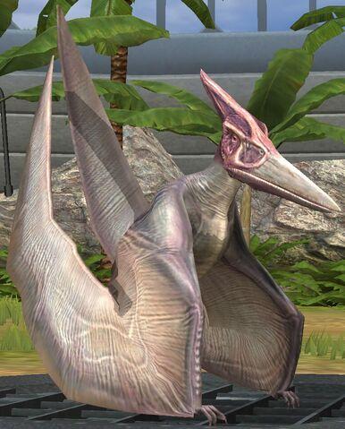File:Pteranodon lvl 10.jpg