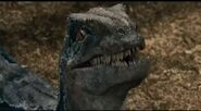 Blueraptor1