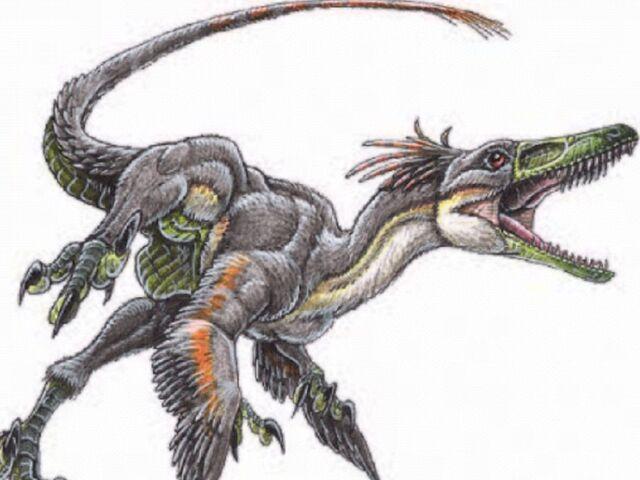 File:Featheredraptor7.jpg