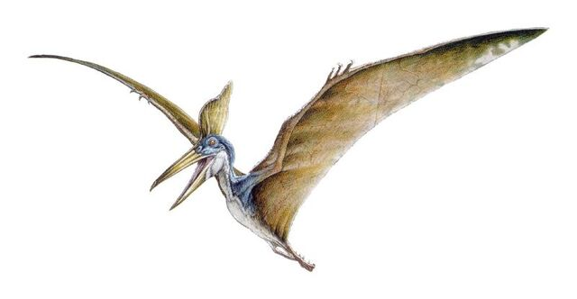 File:Pteraver02jn1.jpg