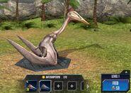Hatzegopteryx Base