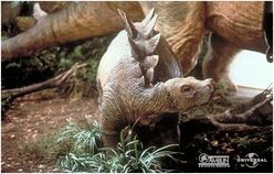 Stegosaurus baby portrait.jpg