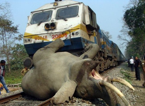 File:Elephant-Gets-Hit-by-a-Speeding-Train-Dies-on-the-Spot-2.jpg