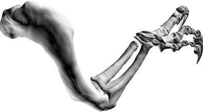 File:Banjos-Arm-4.jpg