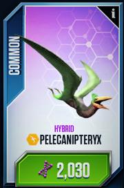 Pelecanipteryx Card