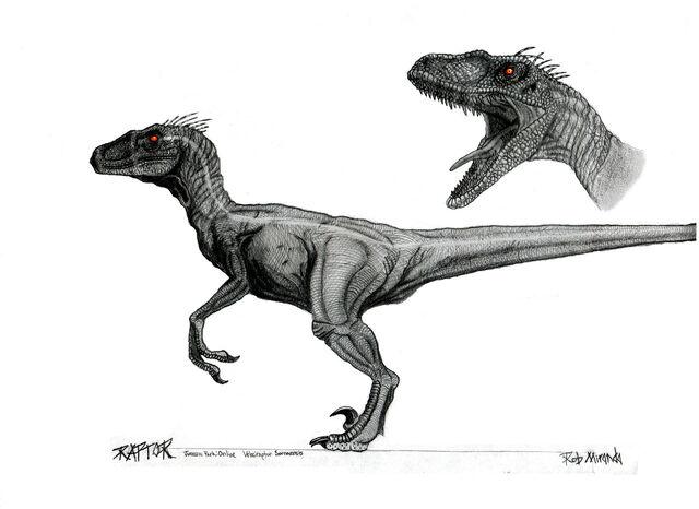File:Velociraptor macho.jpg
