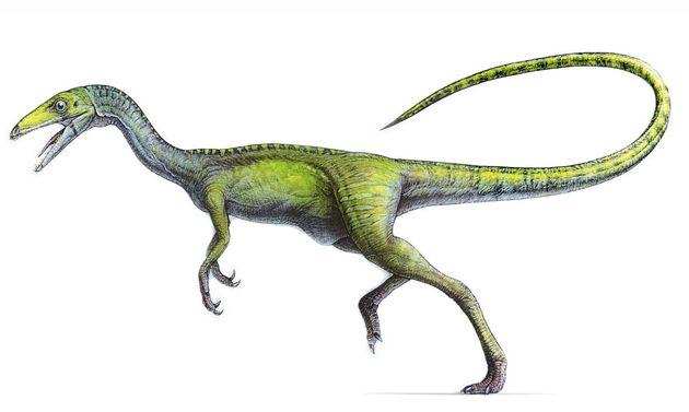 File:Compsoghnathus image medium.jpg