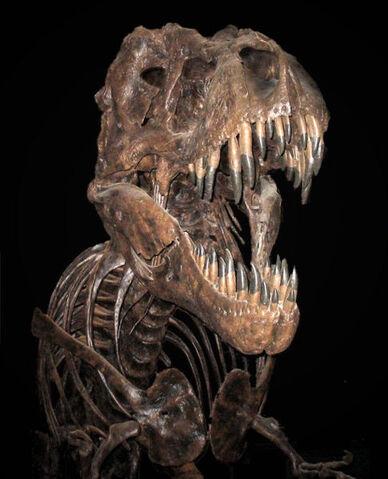 File:SkeletonT-Rex.jpg