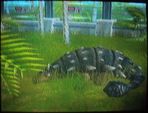 File:Ankylosaurus sleeping.JPG