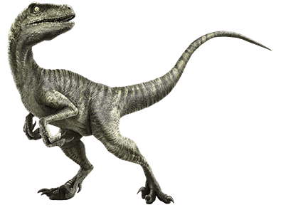 Файл:Velociraptor-info-graphic.png