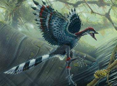 File:Archaeopteryx1.jpg