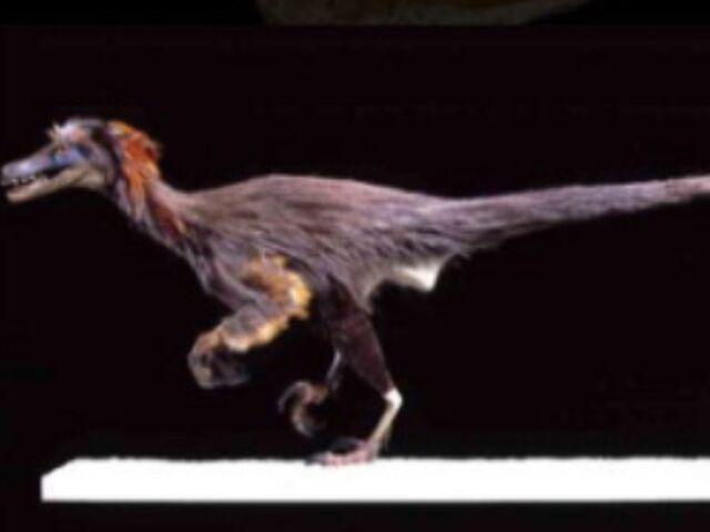 File:Featheredraptor8.jpg