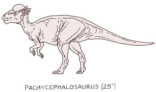 File:Pachycephalosaurus by PonchoFirewalker01.jpg