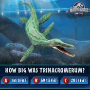 Trinacromerum Quiz