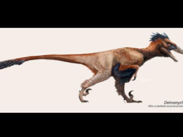 File:Featheredraptor4.jpg