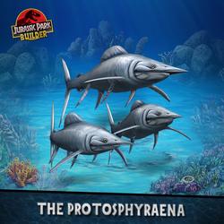 Protosphyraena