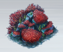 File:Red Acropora Coral.png