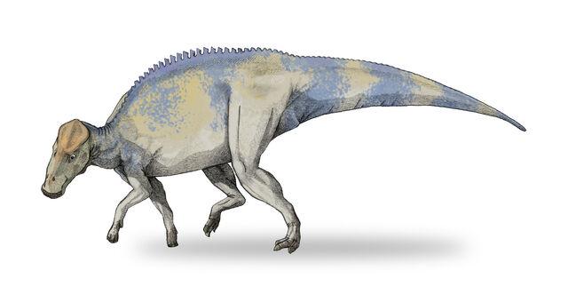File:Brachylophosaurus.jpg