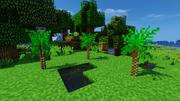 JC screenshot - Scaly Tree Fern