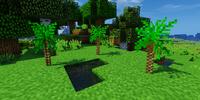 Scaly Tree Fern