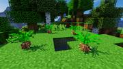 JC screenshot - Cycadeoidea