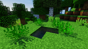 JC screenshot - Dictyophyllum