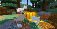 Goat family 2