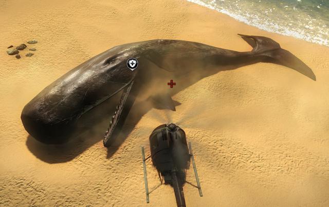 File:Dead whale.png