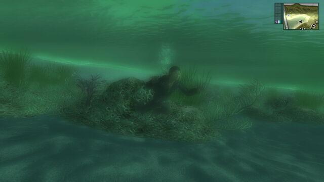 File:Swimming (San Esperito).jpg