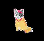 Chiwawa cat