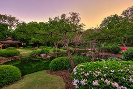 Brisbane Botanical Gardens 03 by cabaran