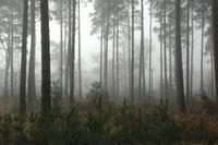 Endor Forest-5200