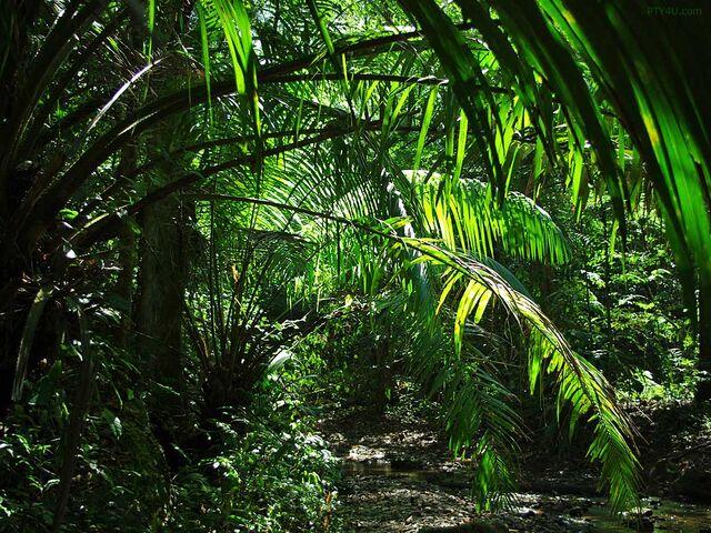 File:Jungle1.jpeg