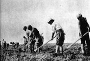 Korean Farmers