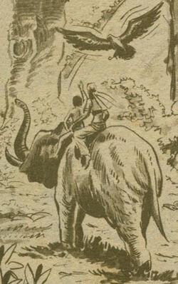 Elefante de Radamés Extra 3