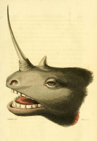 File:John Campbell head of a unicorn.jpg