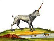 Aldrovandi unicorno camphurch